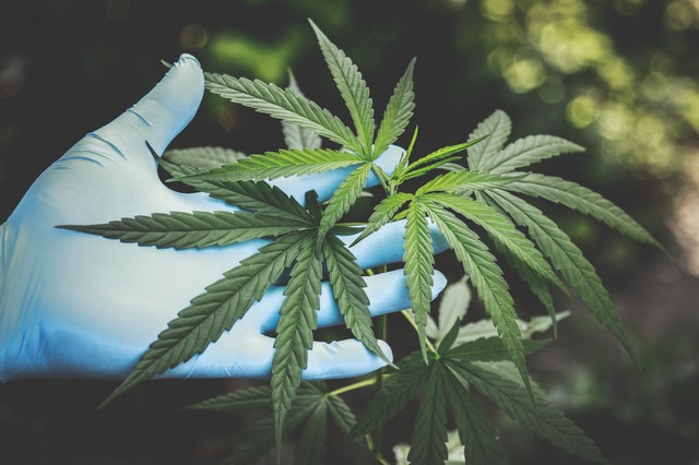 What to look for when buying CBD Hemp medical Oil